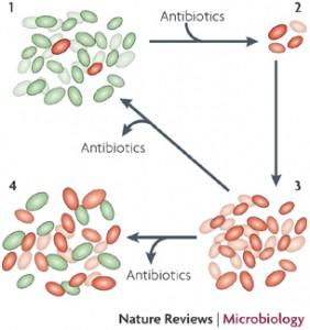 Door overmatig antibioticagebruik verspreiden juist de resistente bacteri?n zich steeds